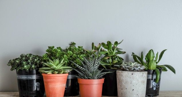 Image Result For Best Indoor Plants