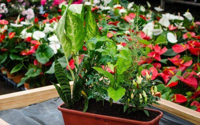 Para espantar as energias negativas da casa, aprenda a montar um arranjo com sete ervas protetoras!