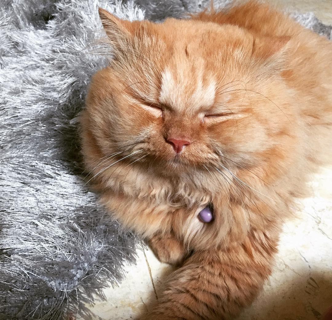 Ari boy 💕 🐾🐾cat catsofinstagram kitty catsuit