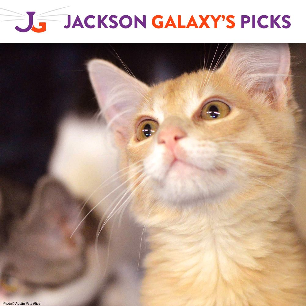 Help BottleFeed Orphaned Kittens at Jackson Galaxy