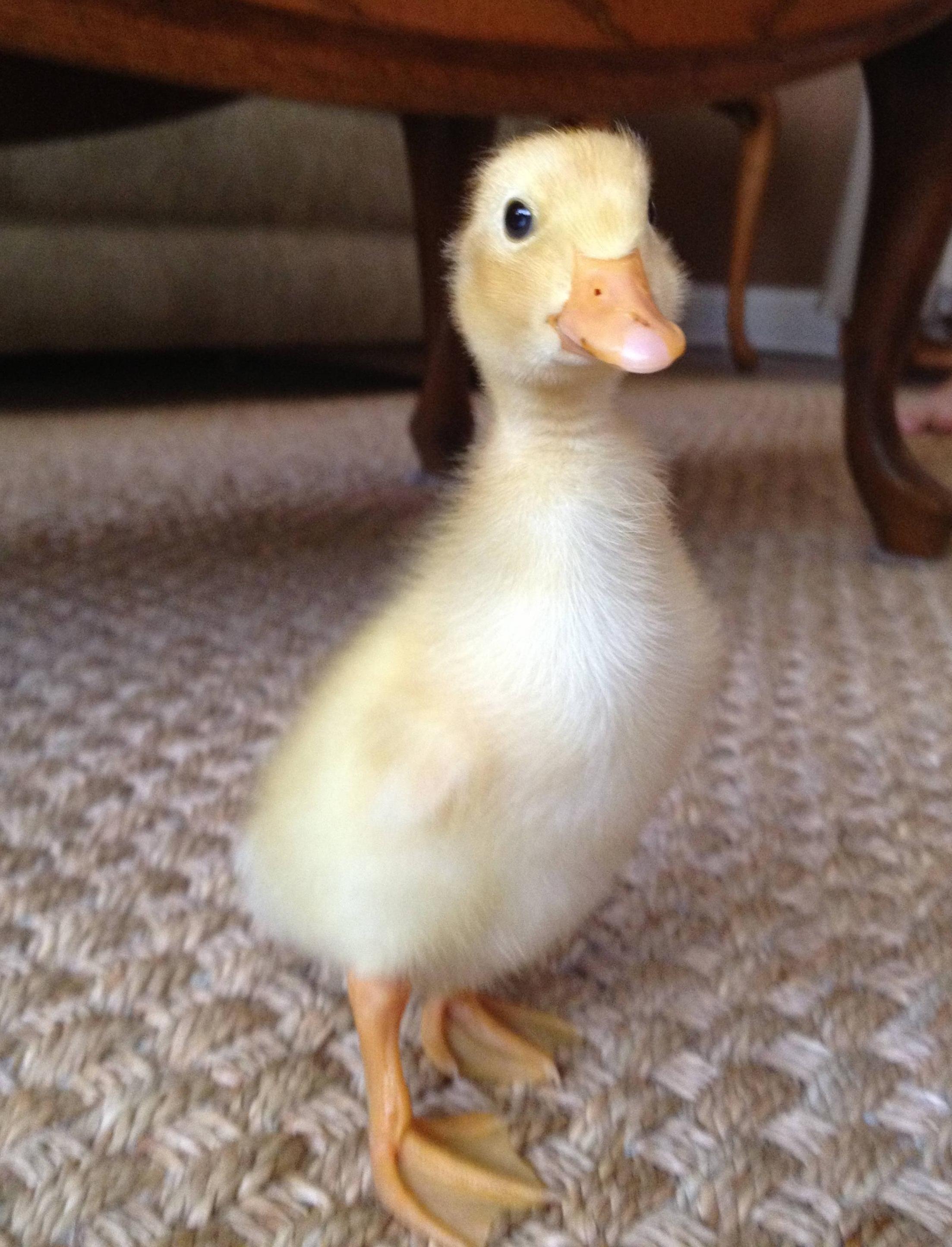 Meet Oscar He S One Week Old