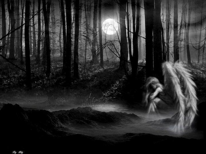 angel forest Fallen