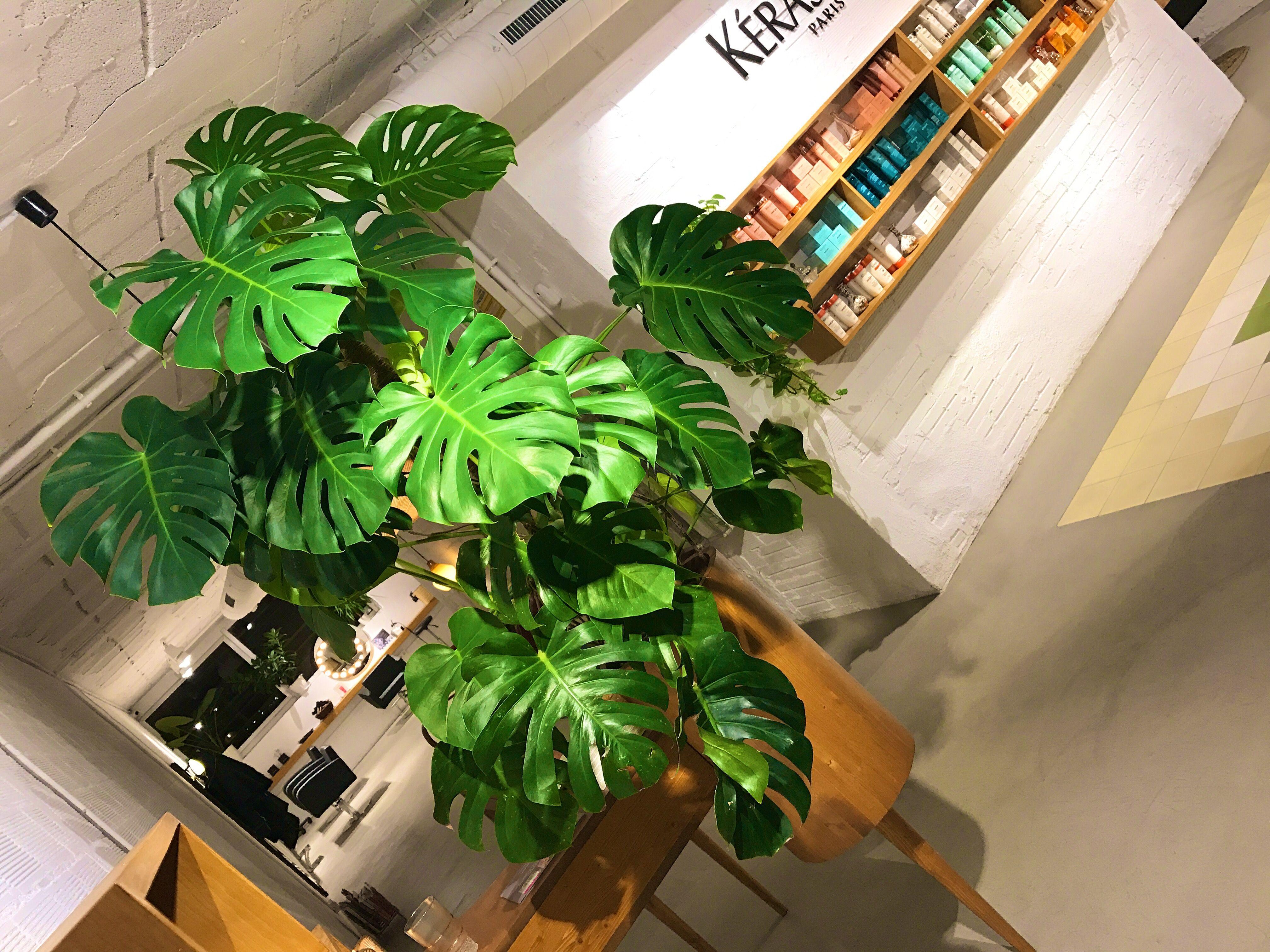 Tropical welcoming! Porque una bienvenida con plantas siempre es una mejor bienvenida 💚 ☘️#barcelona #bcn #reception #welcoming #vintage #vintagestyle #style #barcelonainspira #cool #fashion #fashionblogger #original #plants #plantas #plantes #madera #wood #artesanal #hairsalon #hairsalons #peluqueria #perruqueria