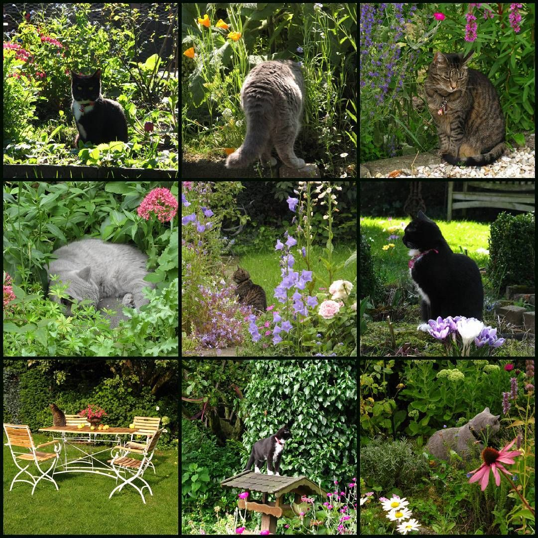 It\'s nice to decorate your garden with a cat here and there for an ...