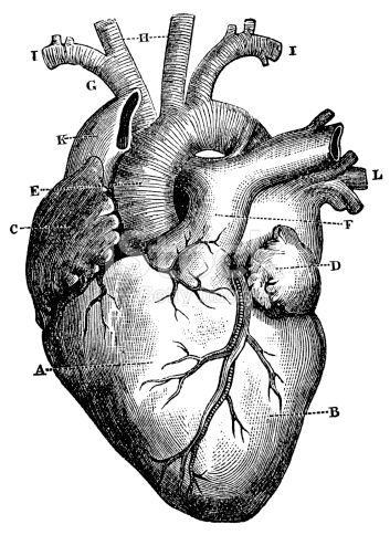 Engraving From 1872 Featuring A Human Heart In 2019