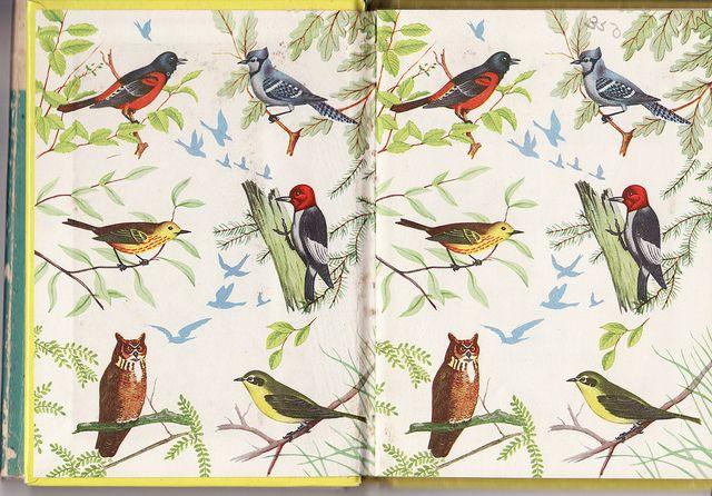 The Yellow Bird Book Bird Book Bird Art Book Cover Art