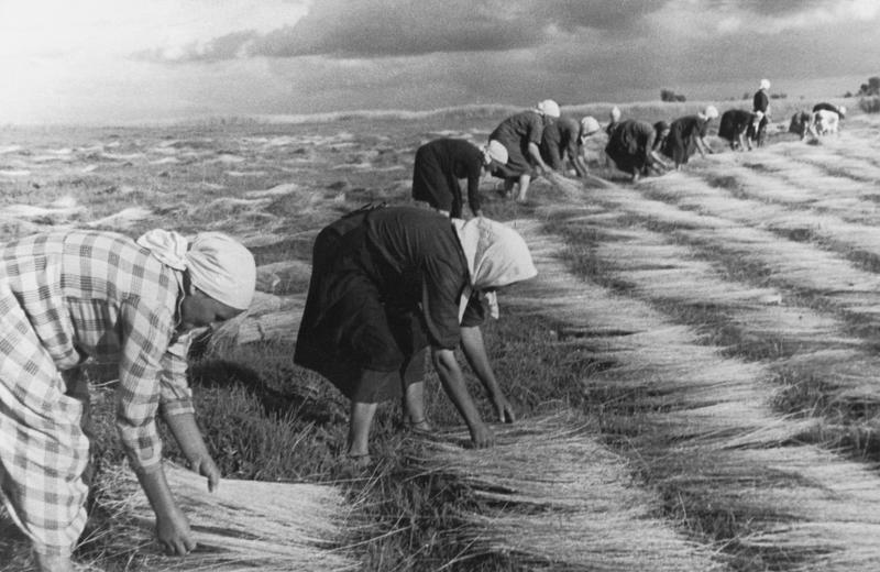 историю выращивание льна в ссср картинки шоколада