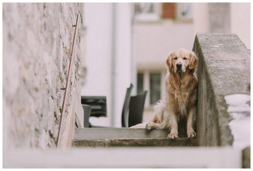 dog training tips videos dogtraininghacks