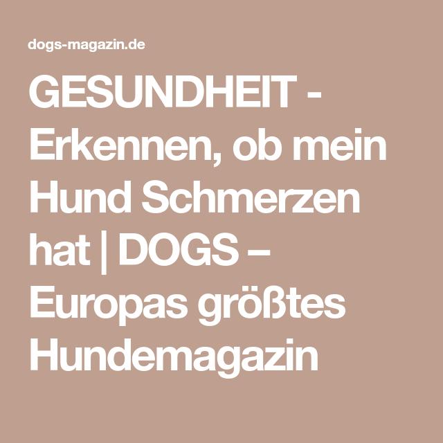 GESUNDHEIT - Erkennen, ob mein Hund Schmerzen hat   DOGS – Europas größtes Hundemagazin