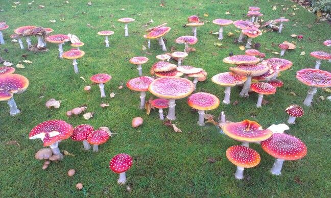 Lovely flyagaric colours and pattern