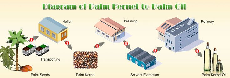 Palm Oil Production Machine Is The Main Equipment In Palm Oil