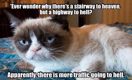"Things that make you go ""hmmm...."" Funny grumpy cat"