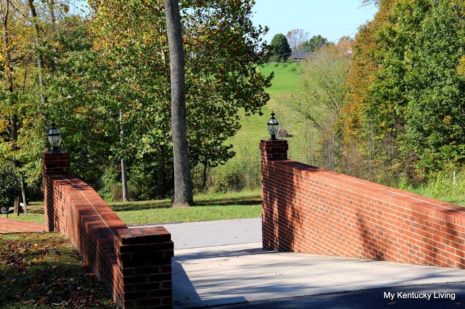 My Kentucky Living My Kentucky Life: Taking a walk with Designer Dog