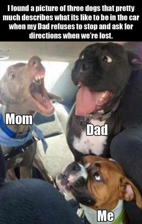 Dog Memes Of The Day 30 Pics Ep29 Dogs Dogme Day Dog Dogme Dogs Ep29 Funny Memes Pics Funny Animal Memes Funny Animal Jokes Funny Dog Memes