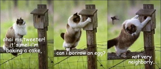 Can I borrow an egg?