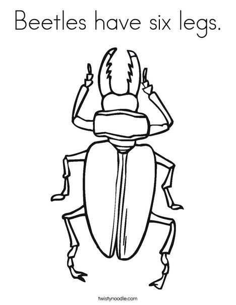 Beetles Have Six Legs Coloring Page Twisty Noodle Insect