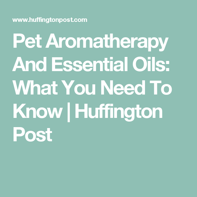 Pet Aromatherapy And Essential Oils: What You Need To Know | Huffington Post