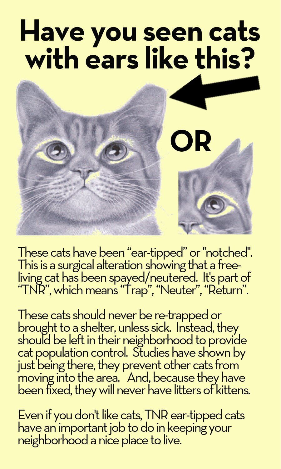 Ear tipped cats help control cat population in neighborhoods