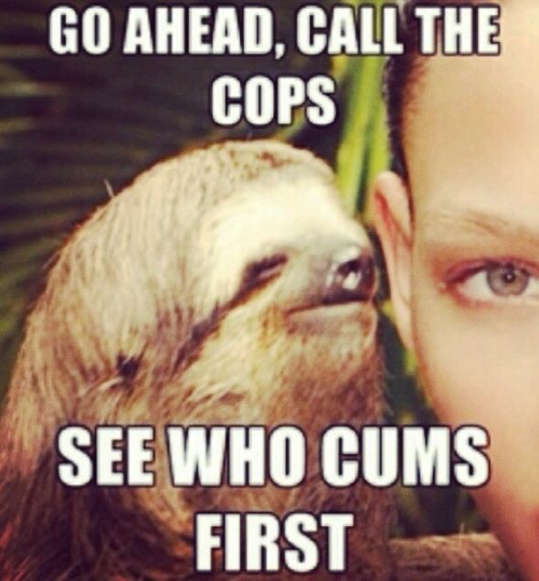 9 Best Creeper Sloth  images in 2019 | Creepy sloth meme