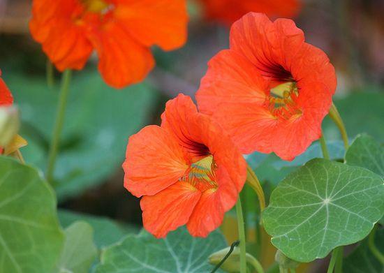 Bukiet Na Talerzu Czyli Jadalne Kwiaty Plants Flowers Rose