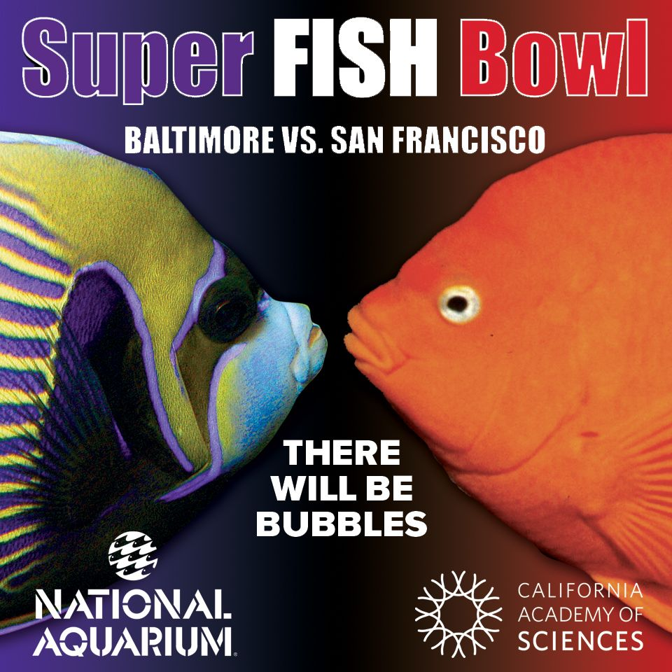BRING IT ON, @California Academy of Sciences! Support the ...