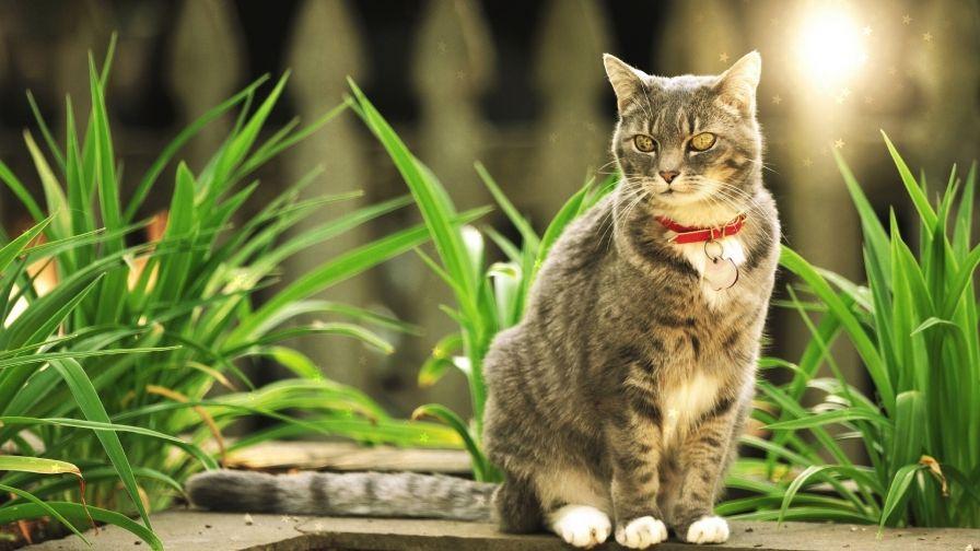 Cute Cat Grass Hd Free Download Wallpapers Cat Grass Cats Cute Cat