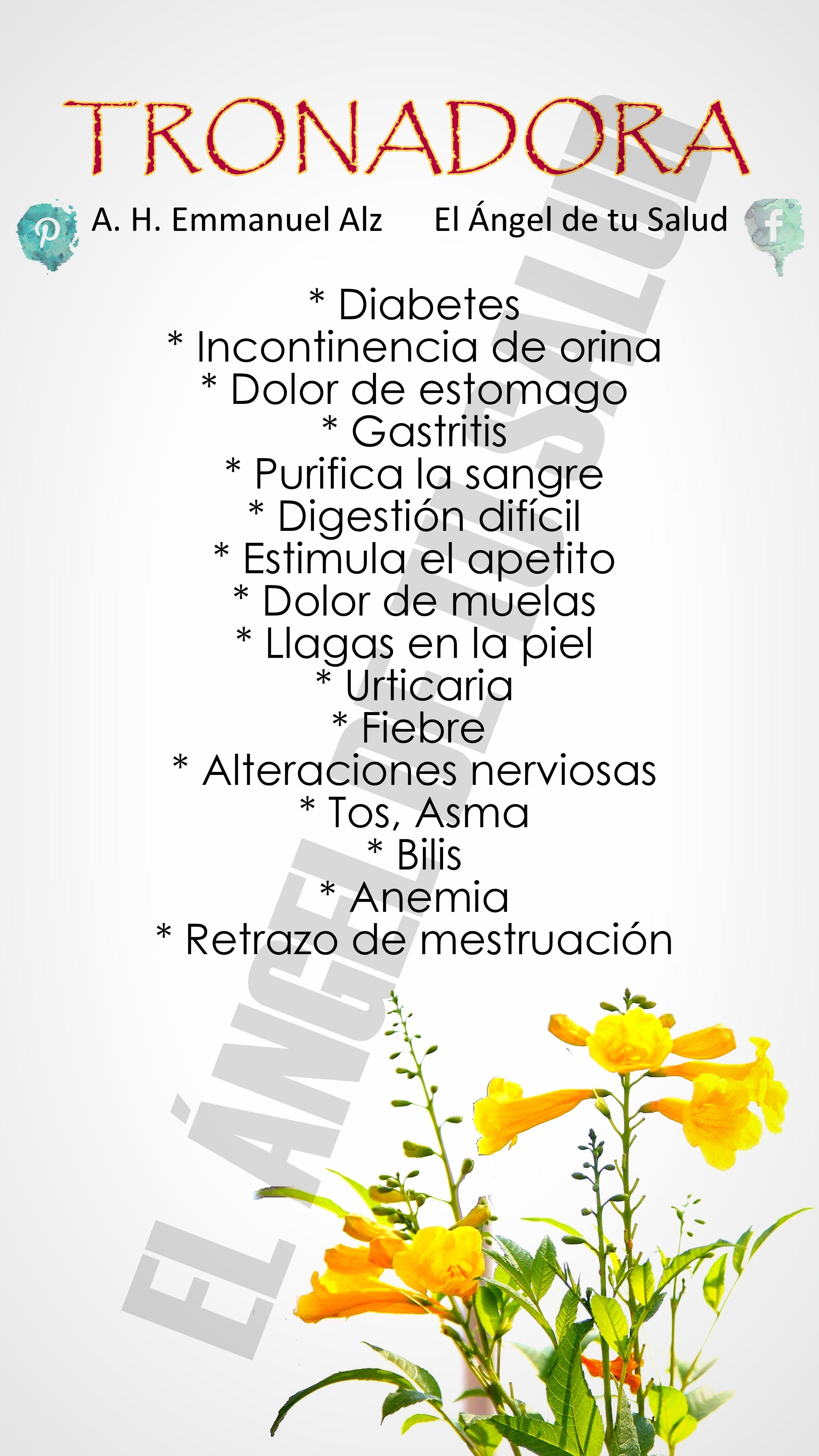plantas medicinales contra la incontinencia urinaria
