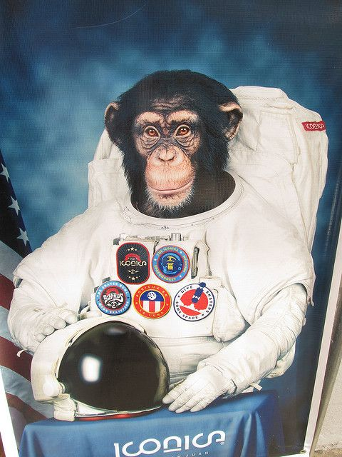 Ham First Chimpanzee in Space | FIRST MONKEY IN SPACE | First monkey in  space, Monkey in space, Monkeys funny