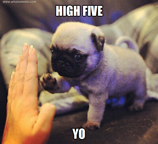 I Especially Like The Added Yo Lol Pug Dogmom Dogdad Adoptdontshop Doglover Lovedogs Rescuedog Shelterdog Cute Baby Pugs Baby Animals Funny Dog Memes
