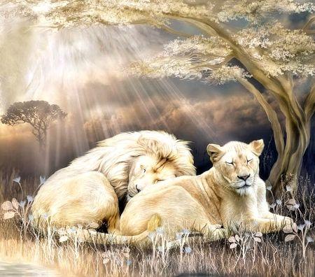 White Lions Desktop Nexus Wallpapers Leones Lion Cat