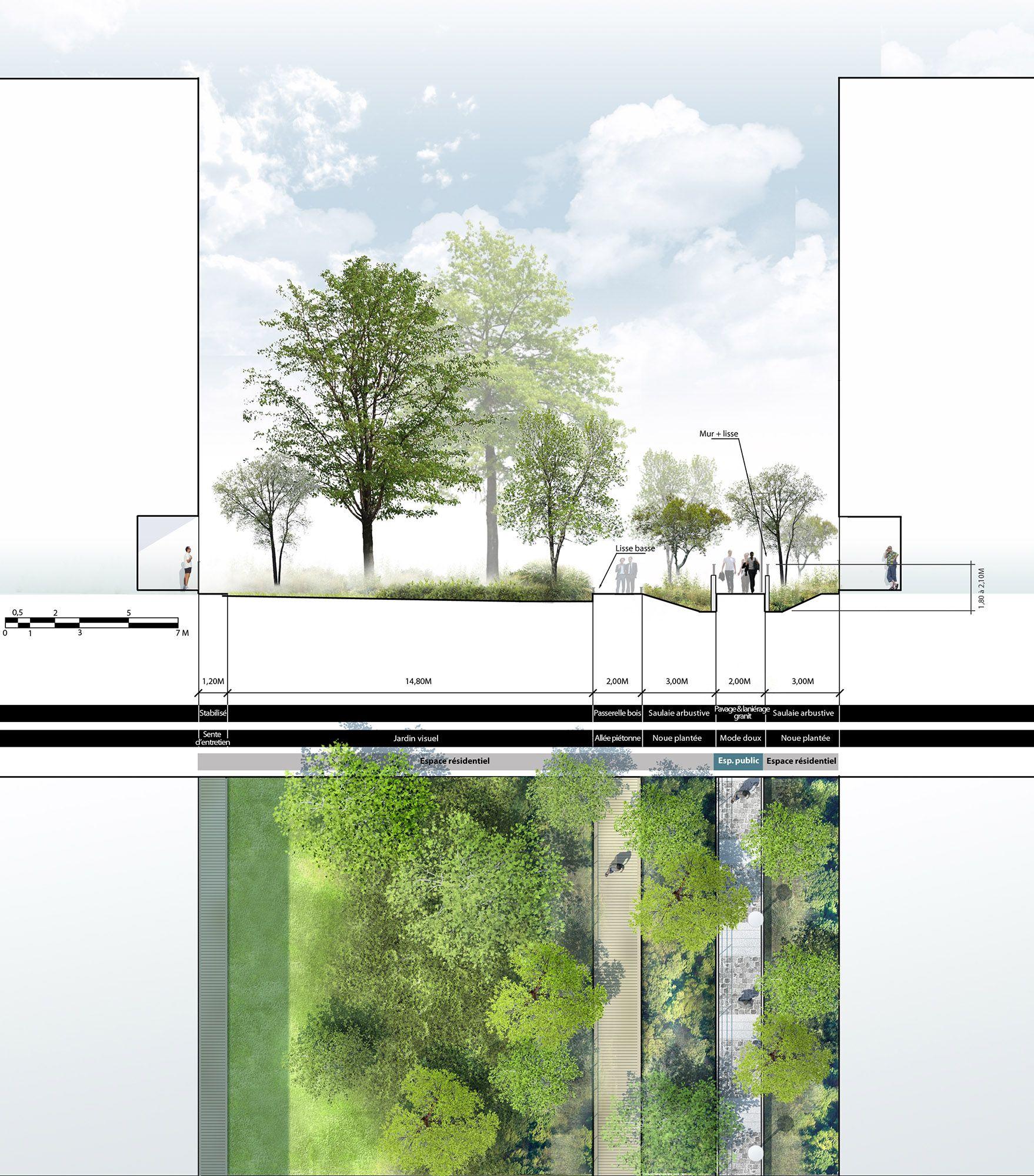 Plan coupe sur l 39 espace public repr sentation for Architecture paysagiste