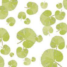 Fototapet - Leaf - Green