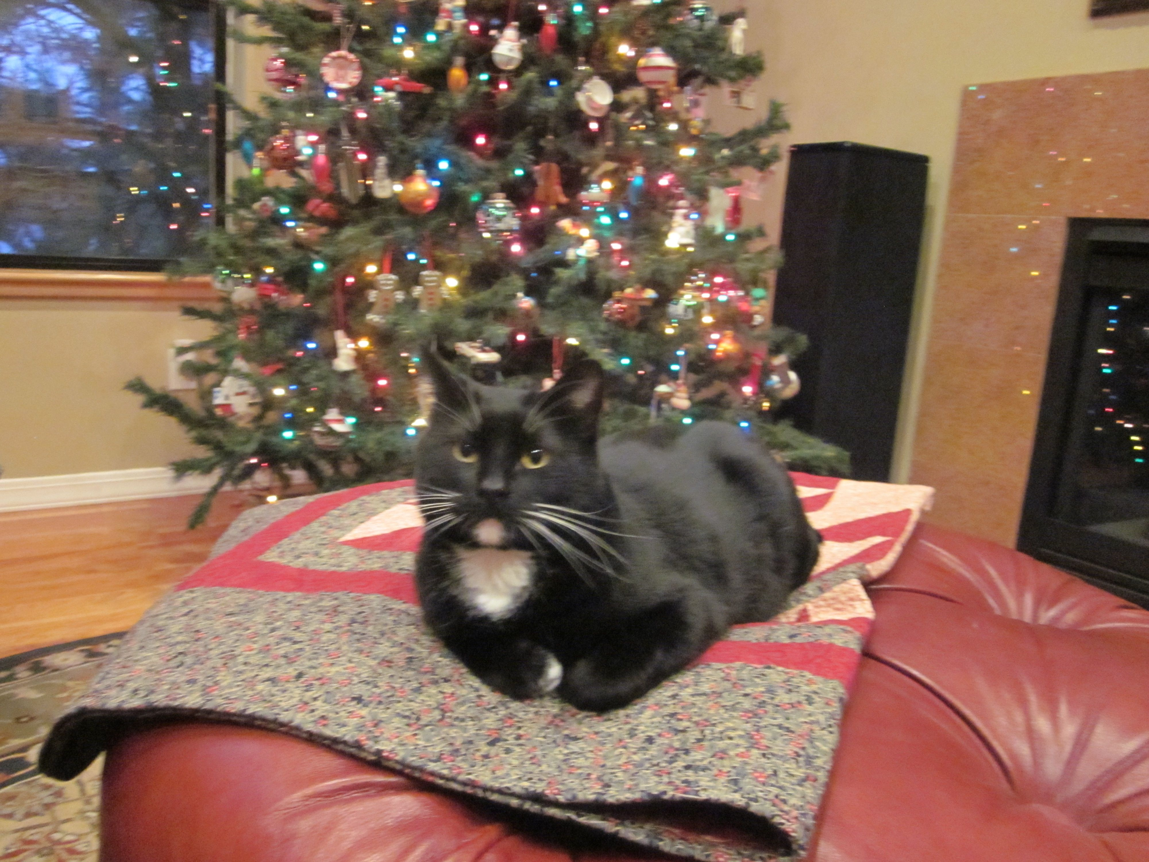 Mooch has a quilt and a Christmas tree Christmas tree