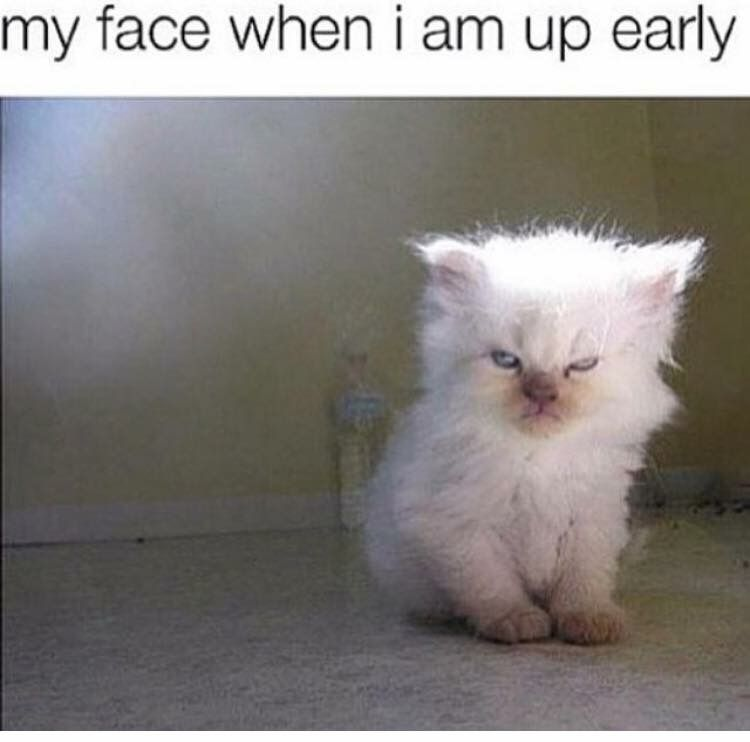 That's the exact face I make