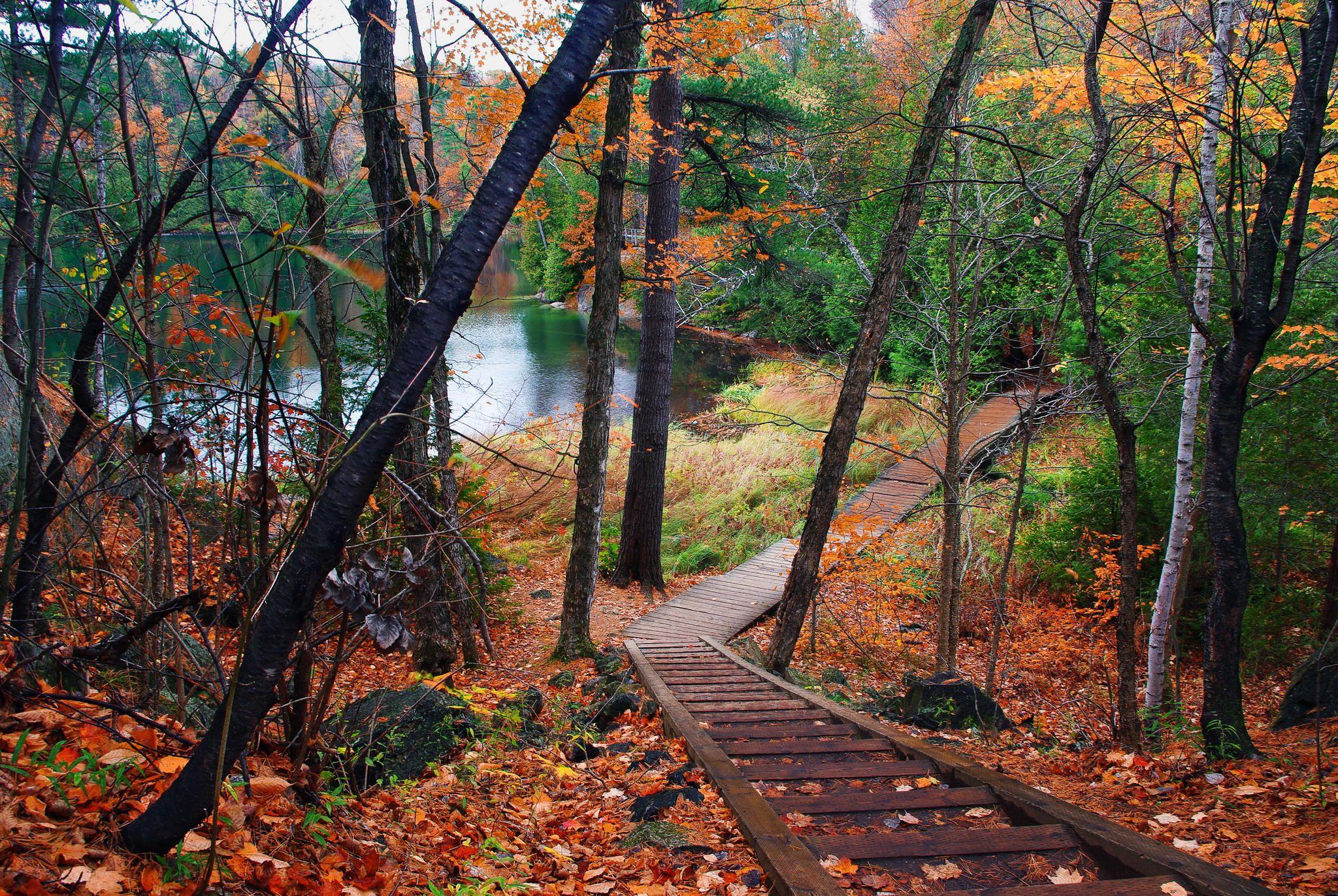Gatineau Park Quebec Canada Couleur Automne Quebec