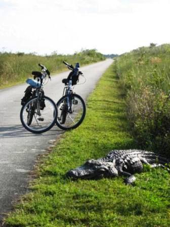 Shark Valley Everglades Everglades South Florida Fun