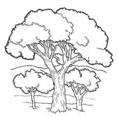 Top 25 Tree Coloring Pages For Your Little Ones Tree Coloring Page Tree Drawing Tree Sketches