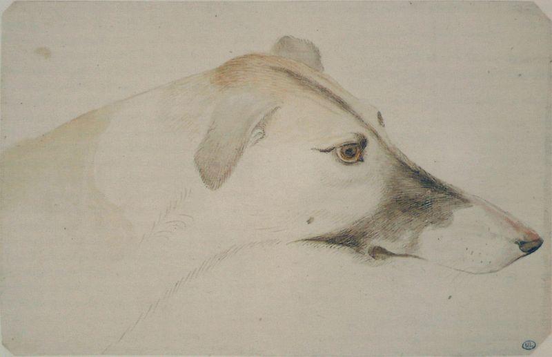 Head of a Greyhound, right profile: Antonio Puccio Pisano (Pisanello) (c. 1395-c.1455), 15th c. (Musée du Louvre, Paris)