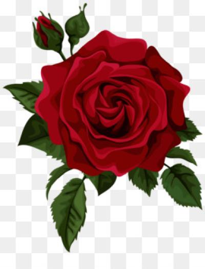 Free Rose Png Images Rose Illustration Rose Flower Png Roses Drawing