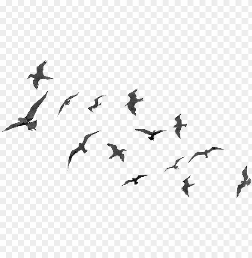 Flying Birds Png Flyingt Birds Png Image With Transparent Background Png Free Png Images Birds Flying Makeup Artist Logo Design Feather Drawing