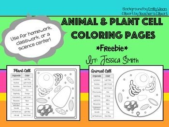 Animal Plant Cell Match And Color Pages Freebie Plant Cell Plant And Animal Cells Plant Cell Activity