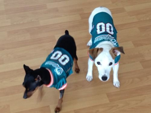 Amazon.com   Pets First NFL Miami Dolphins Jersey 73c46357b
