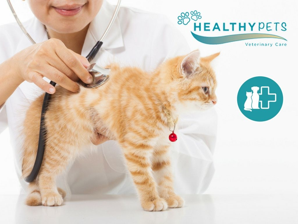Is Your Pet Condition Is Not Well Healthy Pets Veterinary Care Is