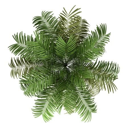 18 Awesome Tree Plan View Png Images Tree Photoshop Tree Plan Photoshop Trees Top View