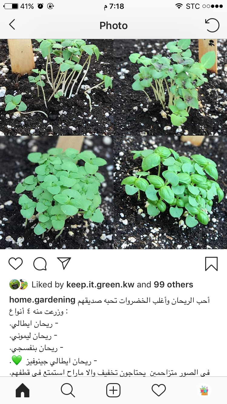 Pin By سوس On نباتات Plants Garden Home And Garden
