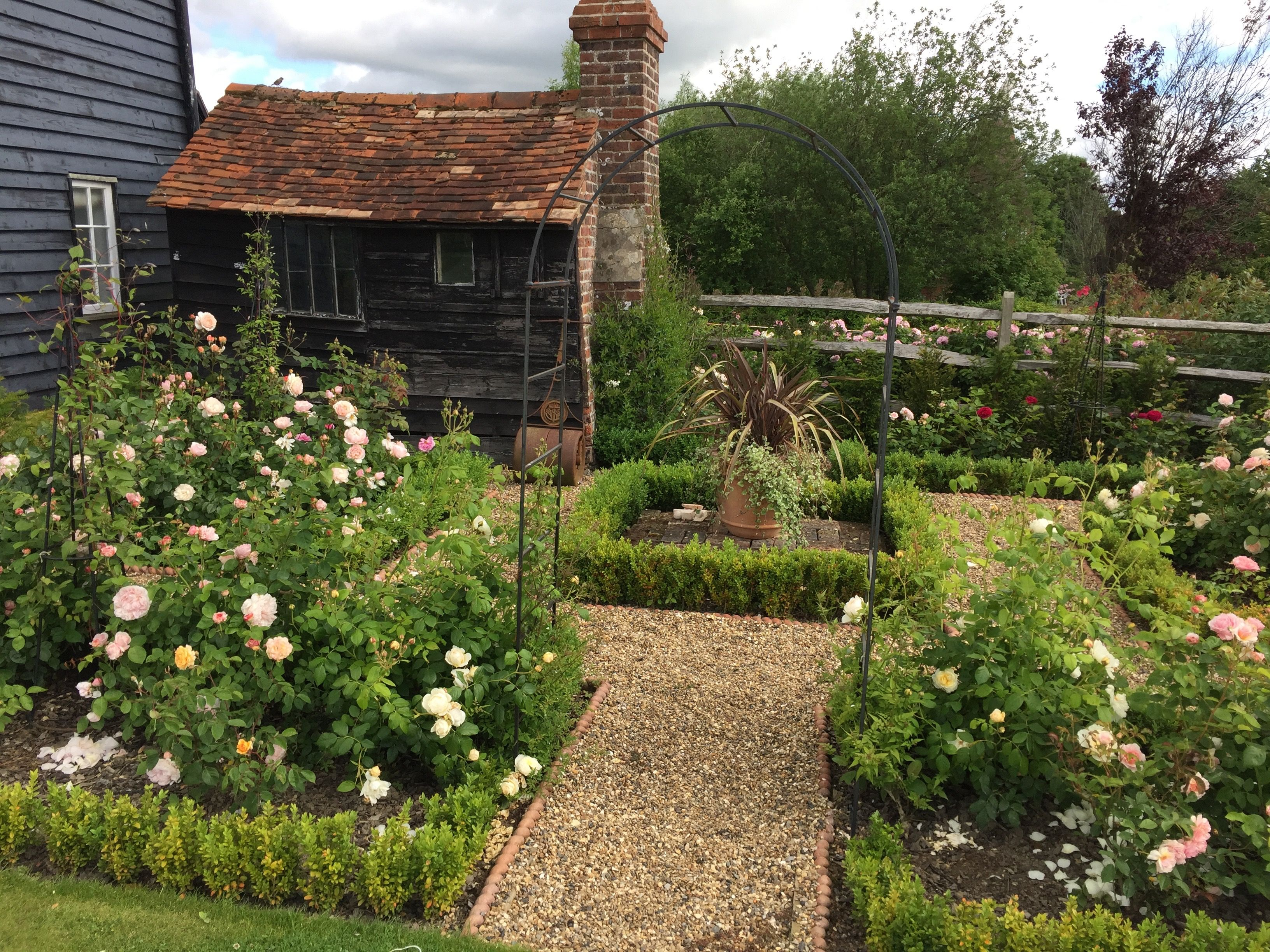 The Soup Kitchen garden which has been planted up with David Austin ...