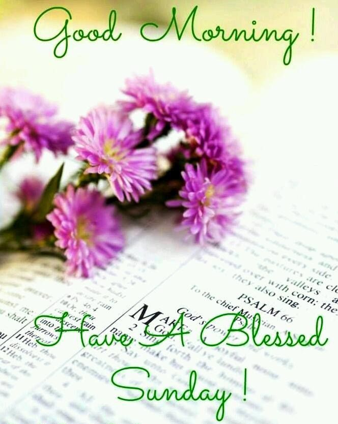 Good Morning , Wishing everyone a Beautiful and Blessed Day! | Have a  blessed sunday, Blessed sunday, Sunday wishes