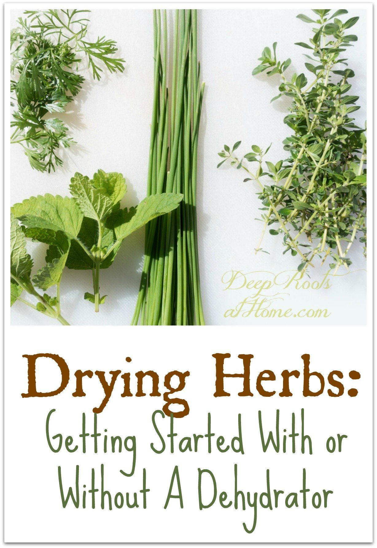 Drying Herbs: Getting Started With Or Without A Dehydrator Drying Herbs: Getting Started With Or Without A Dehydrator,