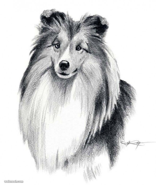 35 Beautiful Dog Drawings And Art Works From Top Artists Dog
