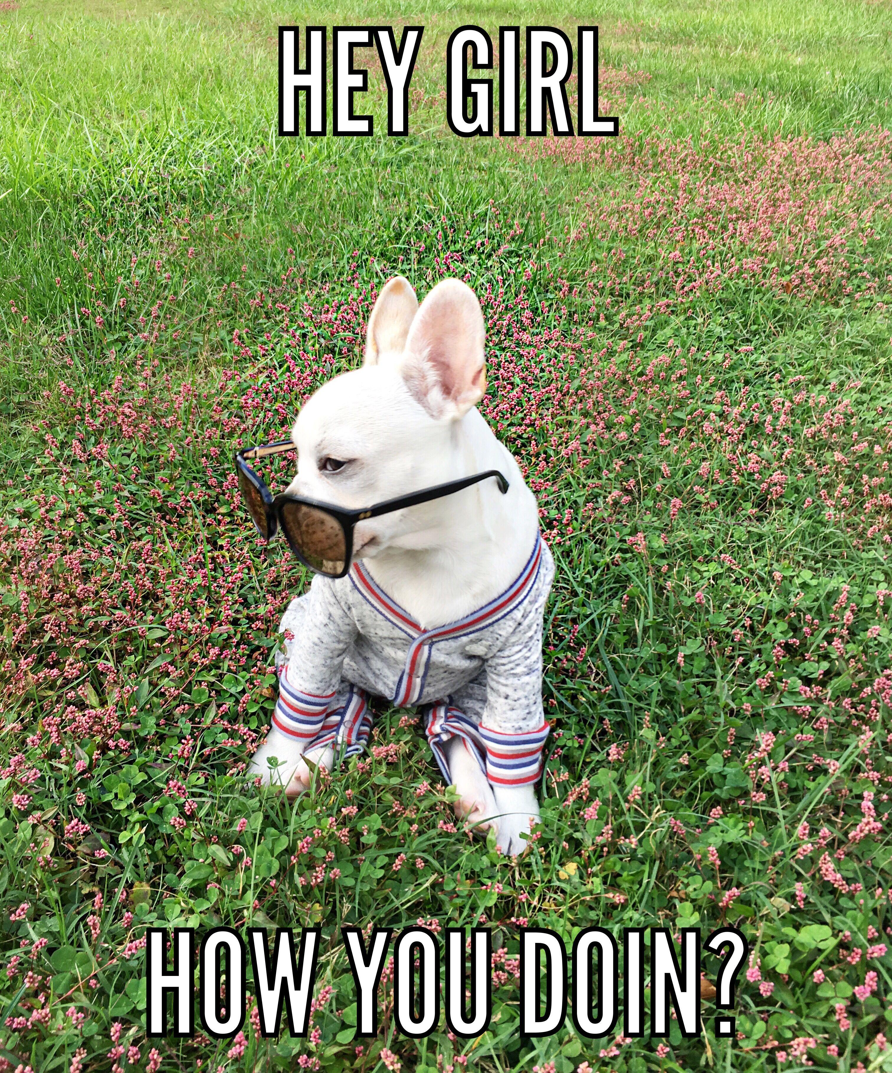 French Bulldog Memes Cute Animals Funny Animals Cute French Bulldog